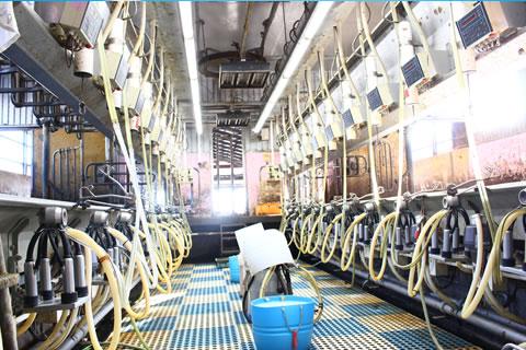イチゴミルク牧場・池田牧場イメージのミルキングパーラー