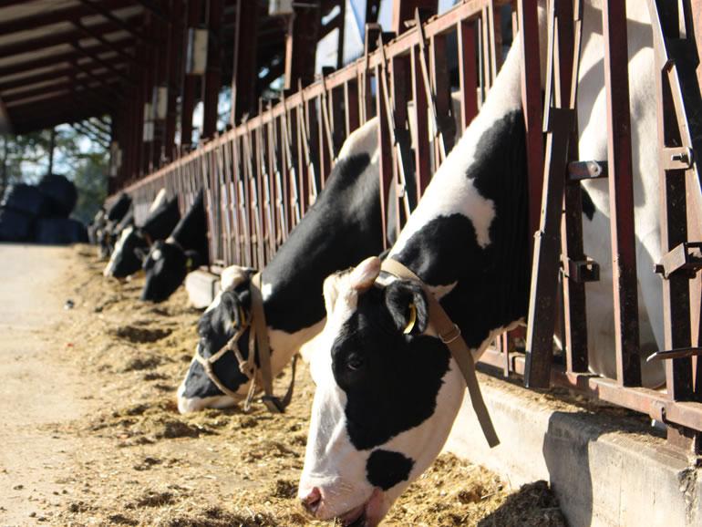 イチゴミルク牧場・池田牧場の働くイメージ
