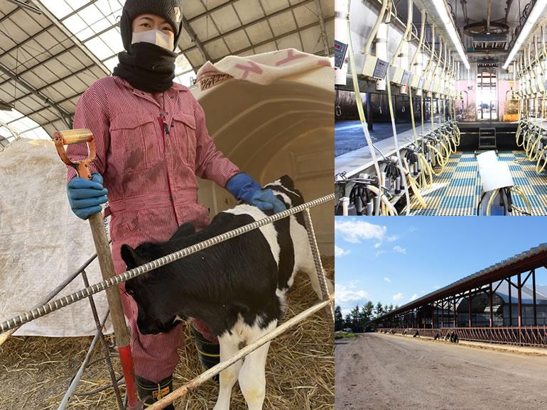 イチゴミルク牧場・池田牧場では酪農を頑張るあなたをしっかりと評価